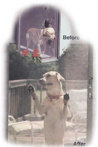 Transparent Pet Door - Pet Door in Harbor City, CA